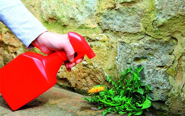 Борьба с нежелательной флорой